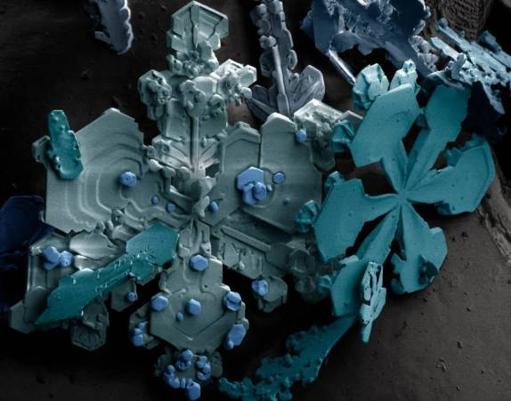 Snowflakes photographed under a Scanning Electron Microscope