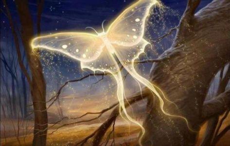 angel-butterfly-1346349406_b