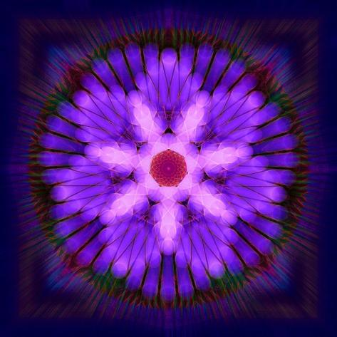 Forced Flower 2 Visual Alchemy