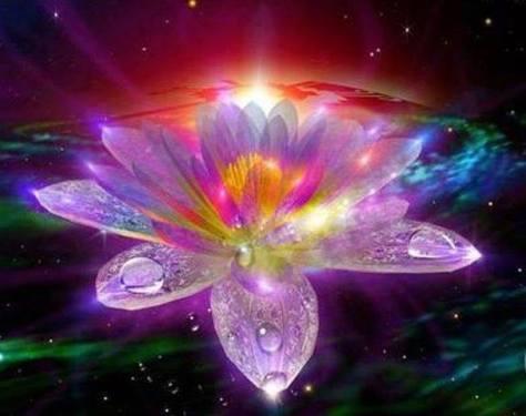 Lotus Ray