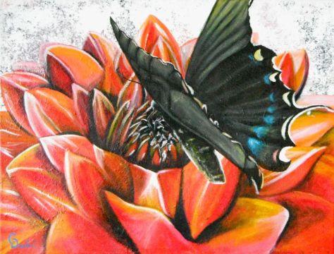 Blk butterfly