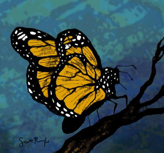 monarch-butterfly-scott-rolfe