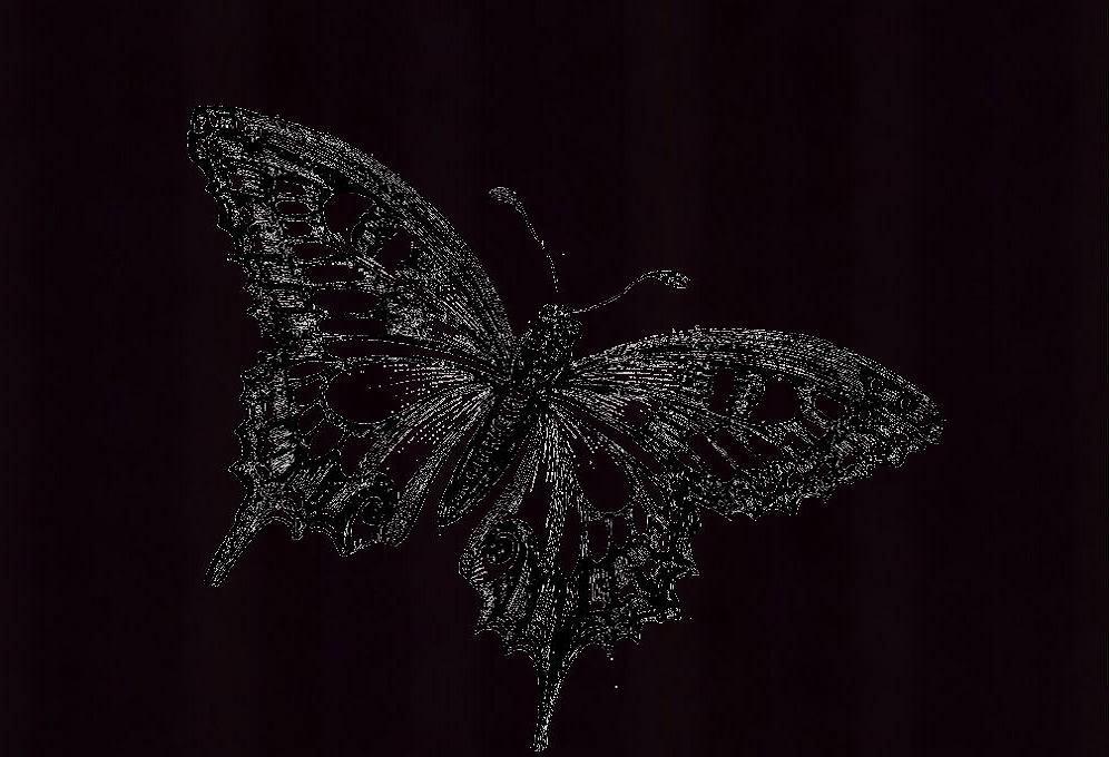 Black Butterfly Meaning   bluebutterfliesandme