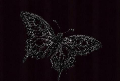 BlackWhiteButterflyBG