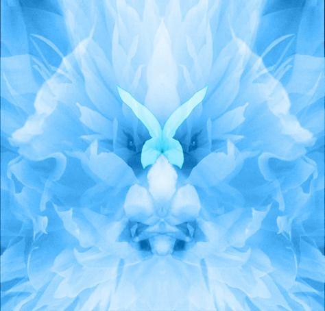 Blue Lotous Flower DN